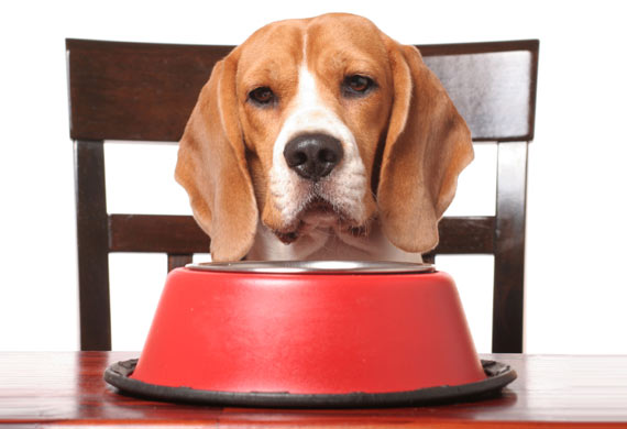 Dog Nutrition for a Balanced Diet